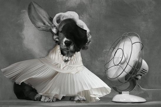 cachorro marylin claro